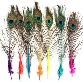 Mini Peacock Feathers with Eye and Coloured Stem - 20cm - Click for Detail